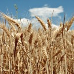 Decreto liquidità: un aiuto per le imprese agricole
