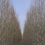 Carta di Matera, 4 azioni agronomi salva-verde urbano e non