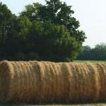 Nuovi fattori di successo, concorso per giovani agricoltori
